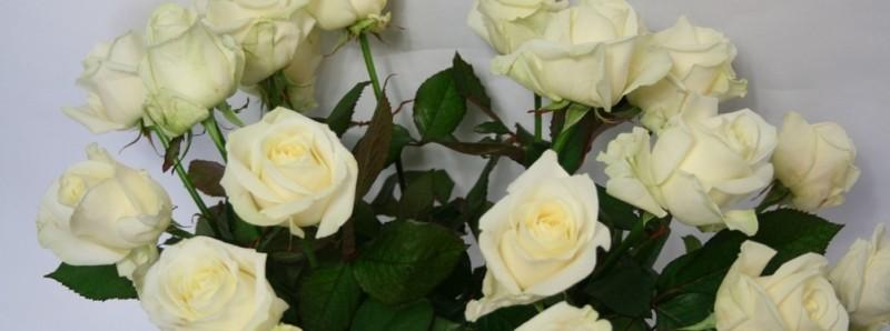 In memoriam: Louw Detmar